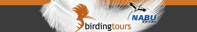 Vogelbeobachtungsreisen Birdingtours Banner